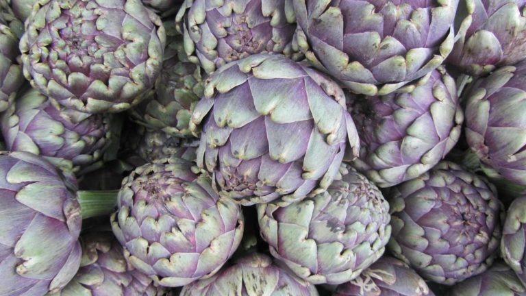fruit legume artichaut