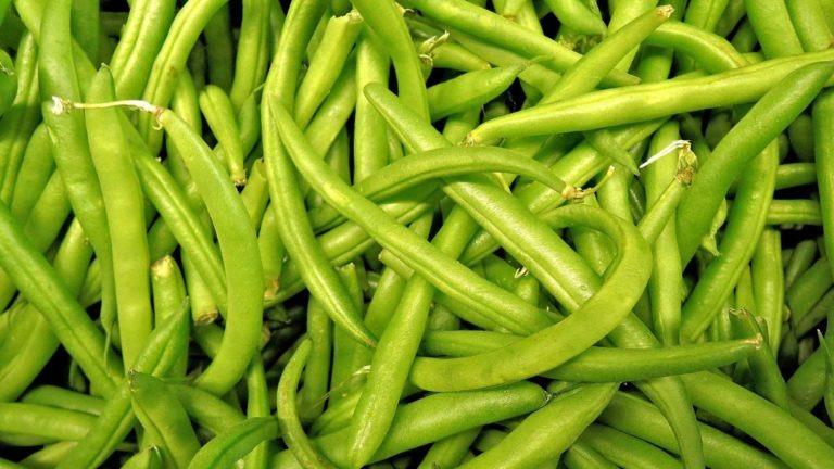 fruit legume haricot vert