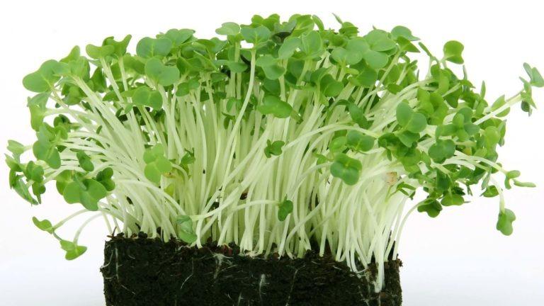 fruit legume cresson