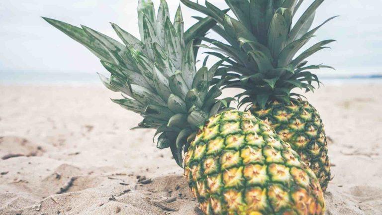 ananas saison