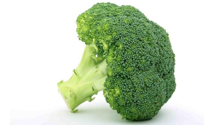 brocolis saison