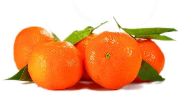 clementine saison