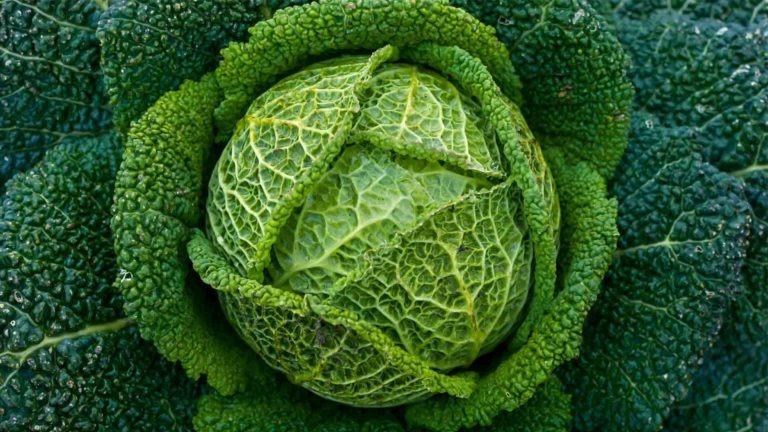 fruits legumes chou vert