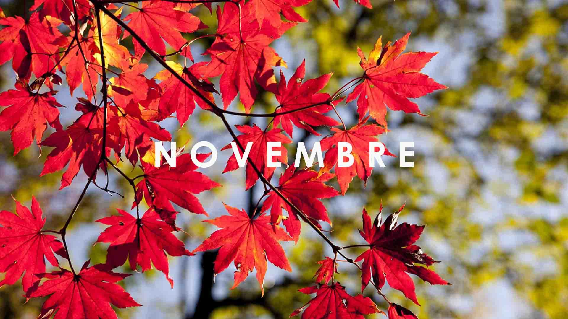fruits legumes novembre saison
