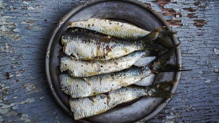 poissons gras riches en bonnes graisses