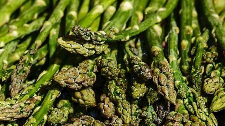 asperge legume de saison