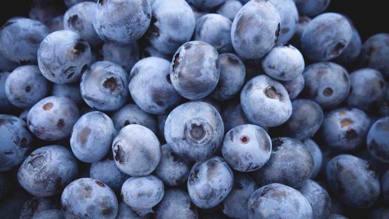 fruits-legumes-myrtille-letort